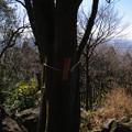 尖浅間(標高315m)