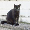 _161018 070 黒ヒョウのような黒猫