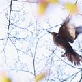 Photos: 羽ばたく。