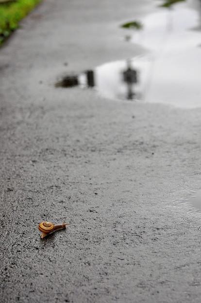梅雨~雨上がりの移動