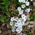 小さな花に虫が...