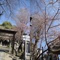 写真: 神社2