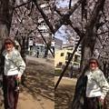 写真: sakura2