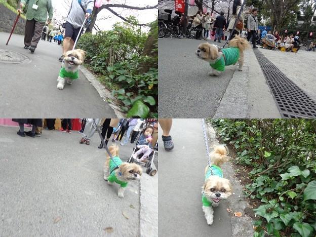 写真: お散歩1