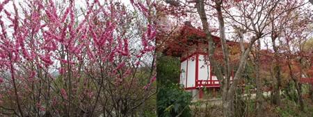 花見山公園園内