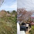 写真: 花見山公園散歩道