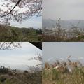 写真: 花見川公園眺望