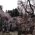 写真: 愛蔵寺