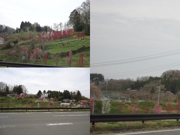 写真: 花やしき公園2