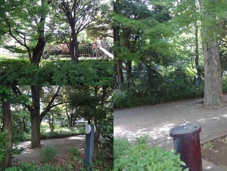駒沢公園手前
