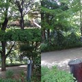 写真: 駒沢公園手前