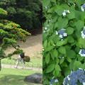 写真: 小石川後楽園2
