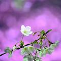Photos: yozakura