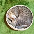 猫はざるで丸くなる
