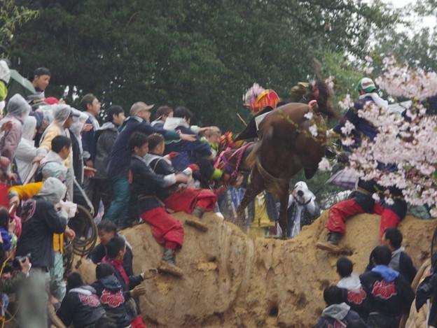 IMGP9652 猪名部神社の上げ馬神事その9「登った!」