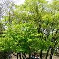環境公園春風景10