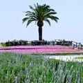 環境公園春風景09