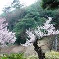 石壁(赤壁):栗林公園10