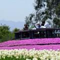 環境公園春風景05