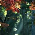 光芒:高野山紅葉62