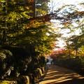 Photos: 高野山紅葉04