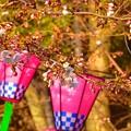 桜祭~名古屋鶴舞公園