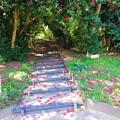 写真: 椿階段
