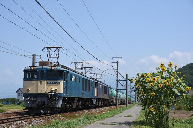 ヒマワリと貨物列車