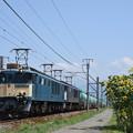 写真: ヒマワリと貨物列車