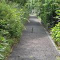Photos: ネコのいる路