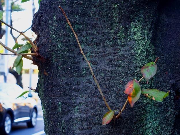 浮間 街路樹