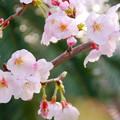 Photos: 朝焼けに、咲く 02
