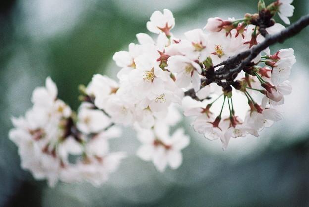 New FM2で撮った春