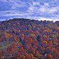 ブナ林秋景