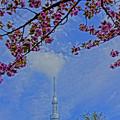 八重桜とツリー