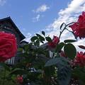 薔薇(熱情)と洋館