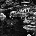 心字池(古河庭園)