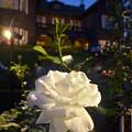 白バラと洋館