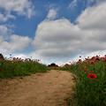 写真: 丘の道
