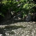 写真: 北の流れ「昭和記念公園」