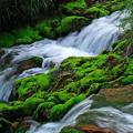 Photos: 苔むす渓流