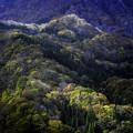写真: 山腹の秋