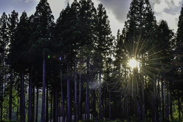写真: 落日「松之山」