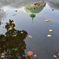 水たまりの秋