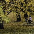 黄葉の中走る