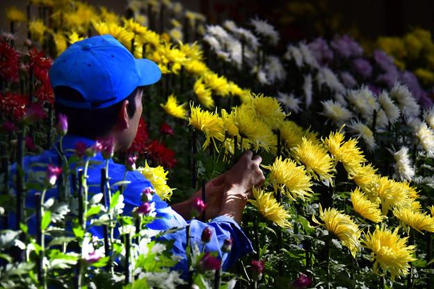 菊花壇にて