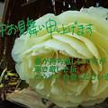 Photos: 寒中1