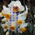 Photos: 寒中4