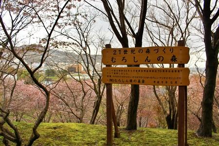 室蘭・入江運動公園にて (4)