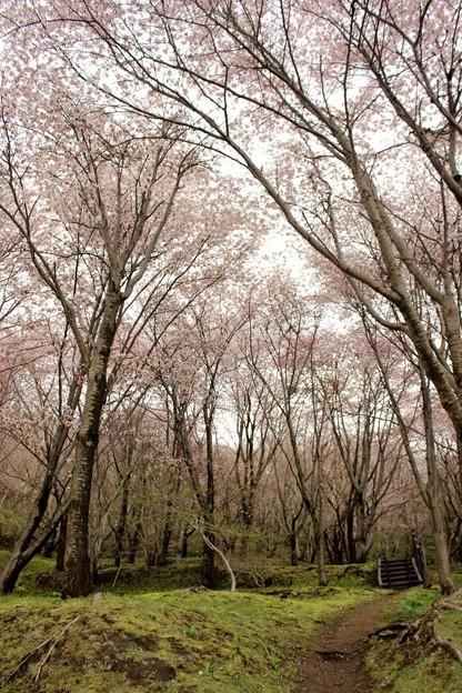 室蘭・入江運動公園にて (6)